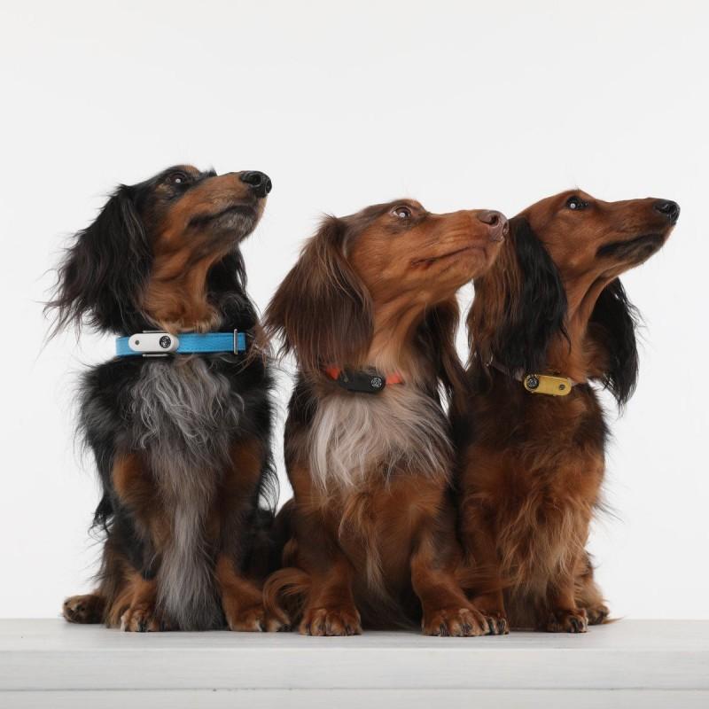 Ultrazvukový repelent Tickless Mini Dog proti klíšťatům
